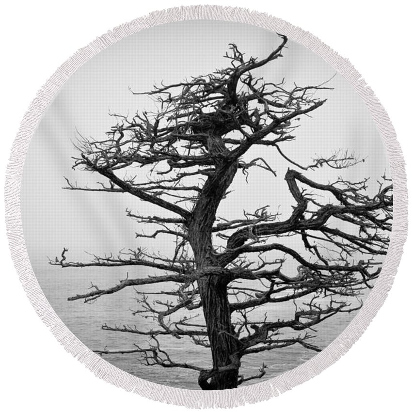 Moody Round Beach Towel featuring the photograph Bare Cypress by Melinda Ledsome