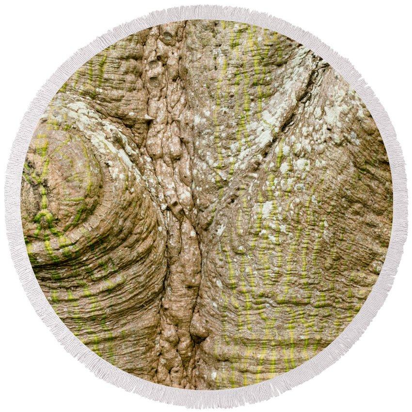 Chorisia Speciosa Round Beach Towel featuring the photograph Bark Of Silk Floss Tree Background Texture Pattern by Stephan Pietzko