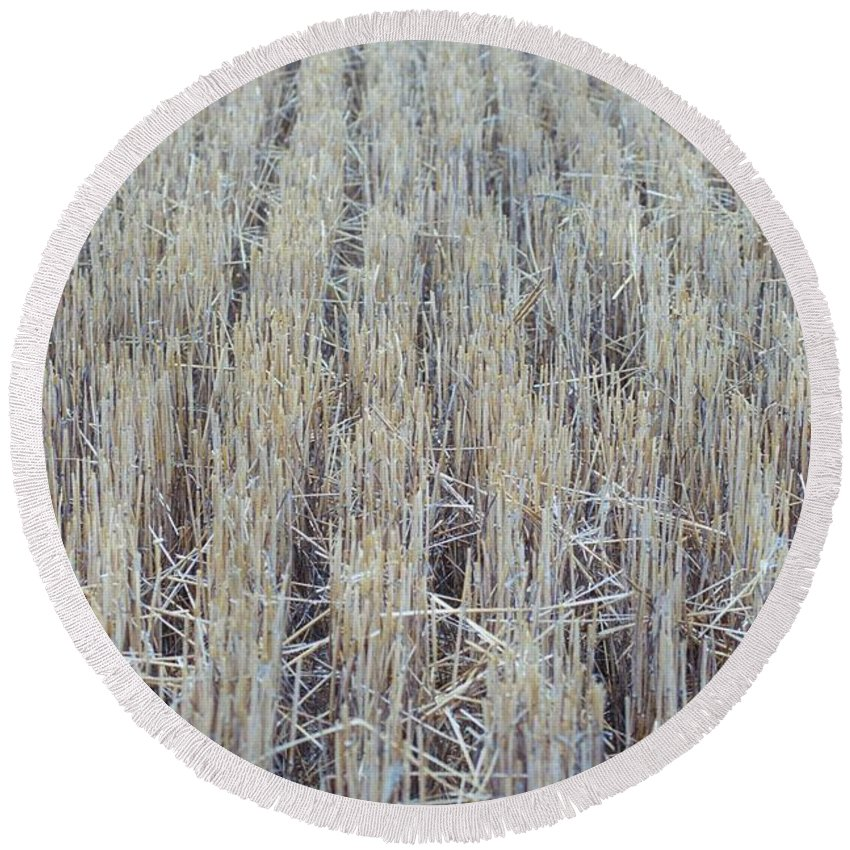 Barley Round Beach Towel featuring the photograph Barley by James Michael Olson