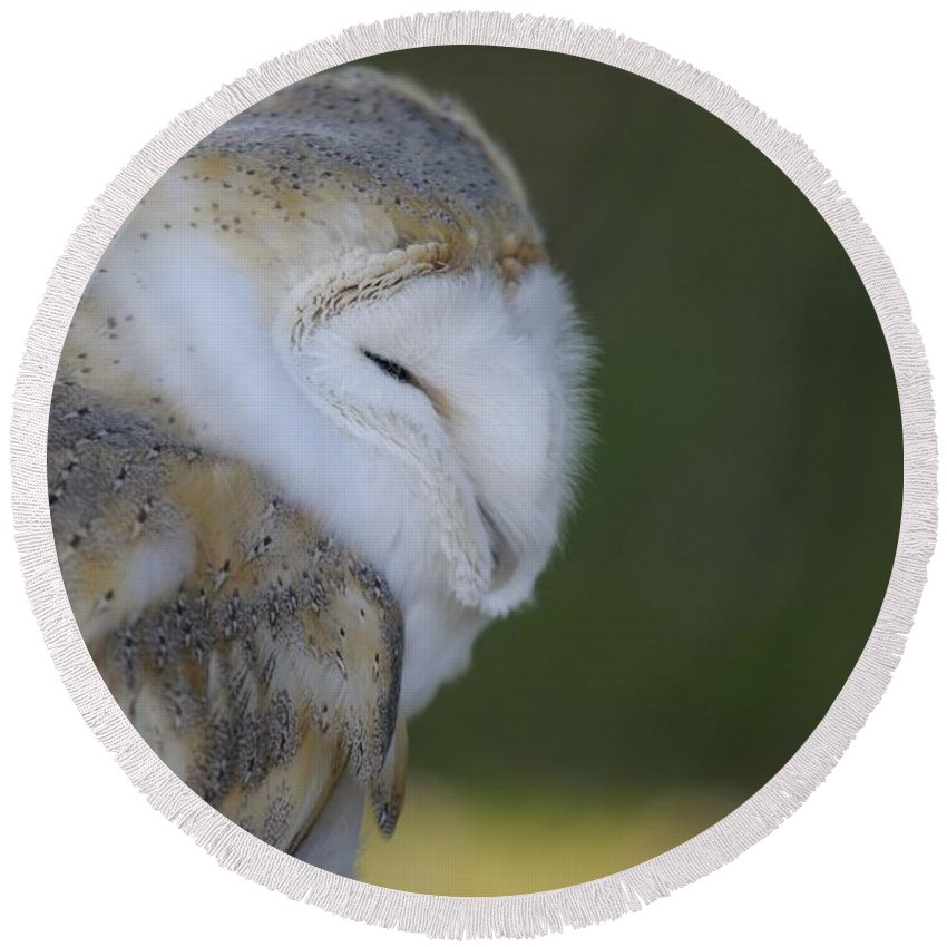 Barn Owl Round Beach Towel featuring the photograph Barn Owl by Jenny Potter