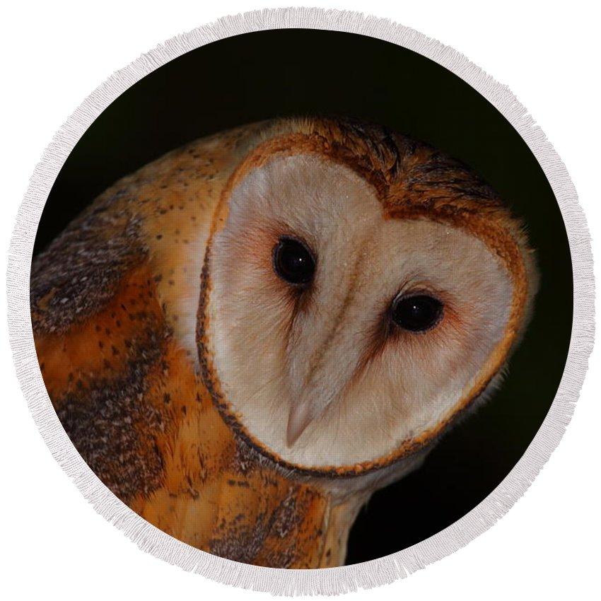 Owl Round Beach Towel featuring the photograph Barn Owl Portrait II by Bruce J Robinson