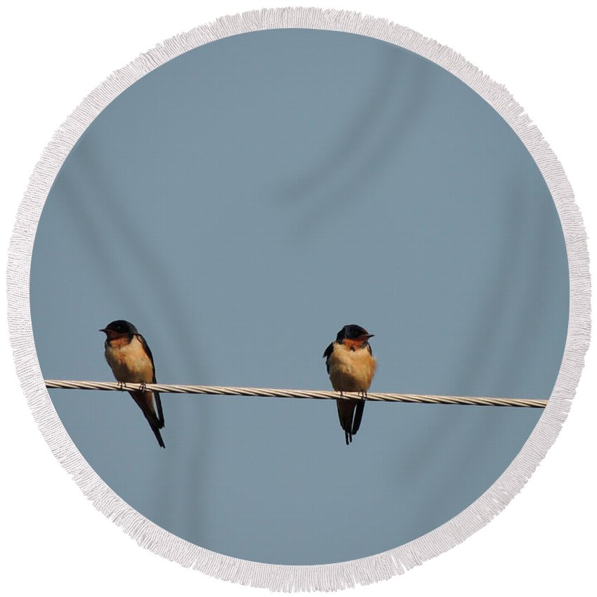 Digital Photography Round Beach Towel featuring the photograph Barn Swallows by Kim Pate