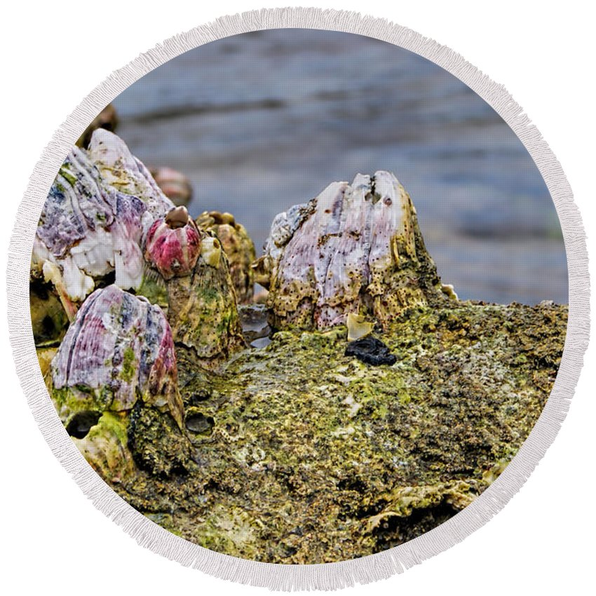Barnacle Round Beach Towel featuring the photograph Barnacles by Olga Hamilton