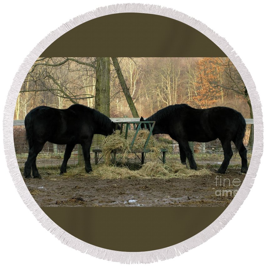 Horse Round Beach Towel featuring the photograph Barnyard Beauties by Ann Horn