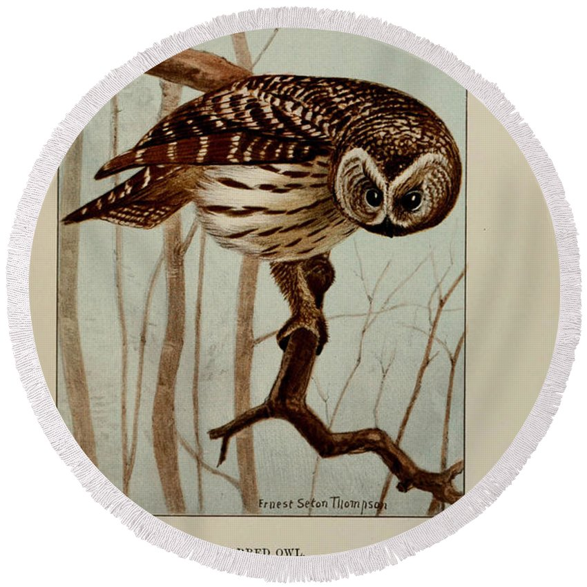 Barred Round Beach Towel featuring the painting Barred Owl by Ernest Seton Thompson