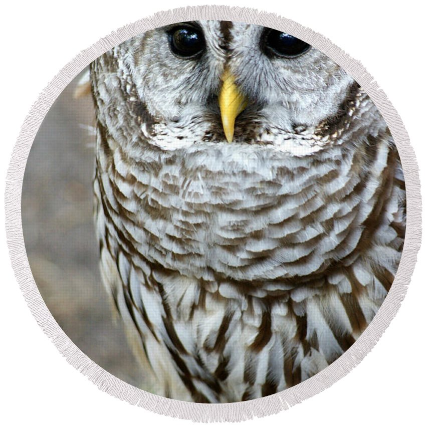 Owl Round Beach Towel featuring the photograph Barred Owl II by Larry Allan