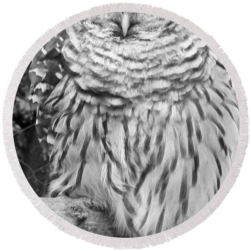 Barred Owl In Black And White Round Beach Towel featuring the photograph Barred Owl In Black And White by John Telfer