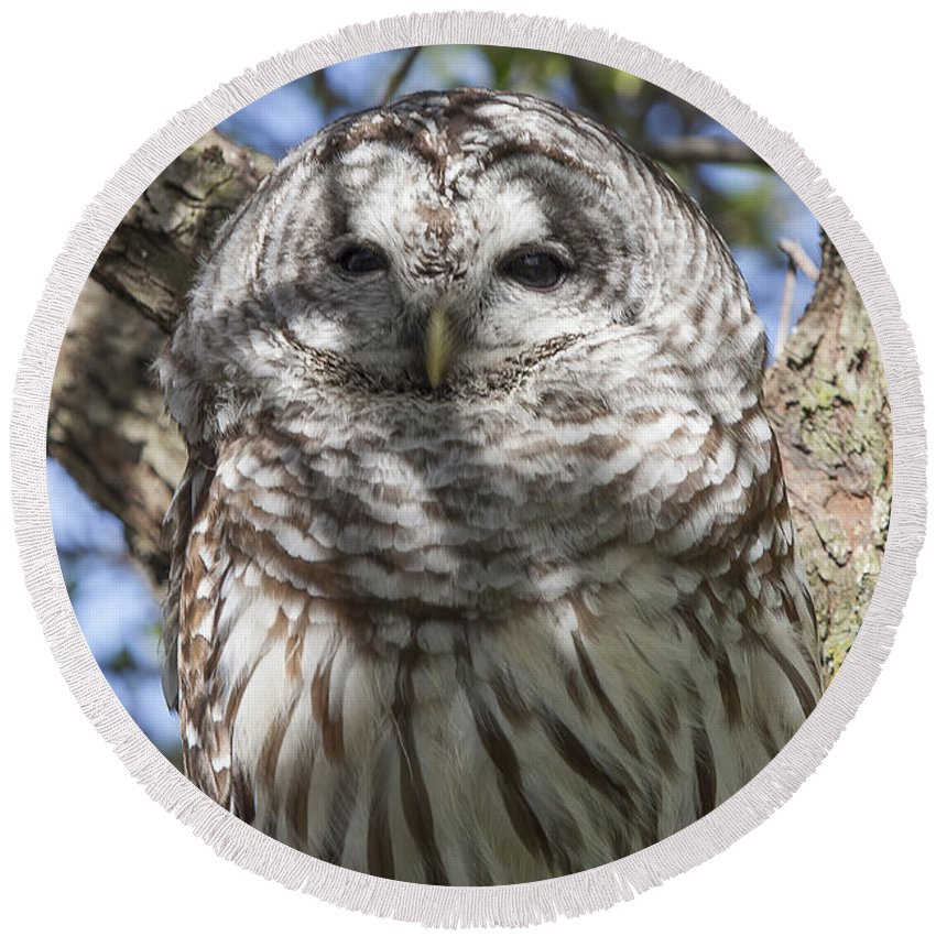 Animal Round Beach Towel featuring the photograph Barred Owl by Jack R Perry