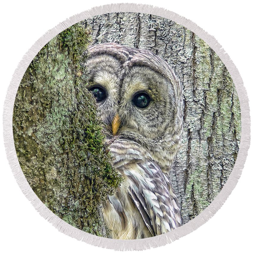 Owl Round Beach Towel featuring the photograph Barred Owl Peek A Boo by Jennie Marie Schell
