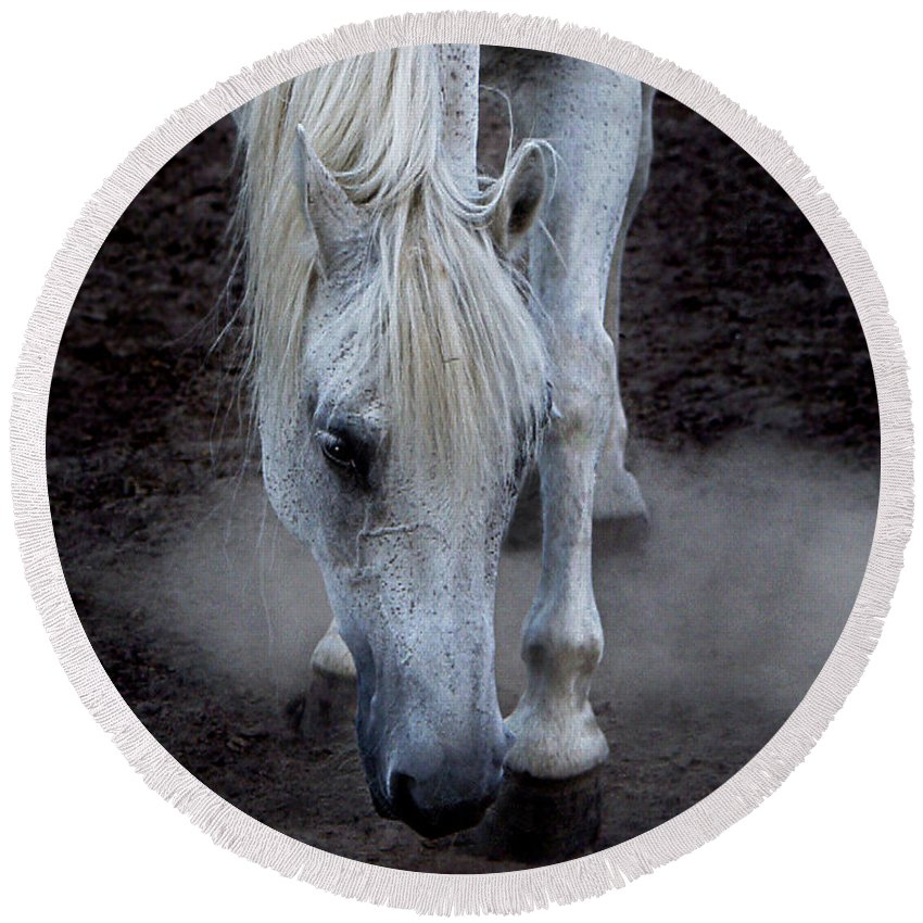 Horse Round Beach Towel featuring the photograph Basic Instincts by Joachim G Pinkawa