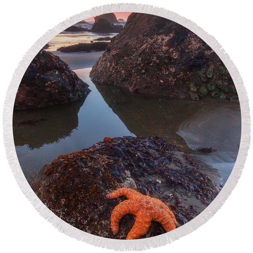 Starfish Beach Products
