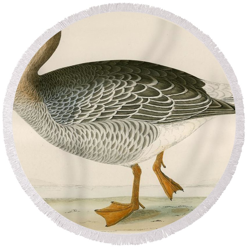 Birds Round Beach Towel featuring the photograph Bean Goose by Beverley R. Morris