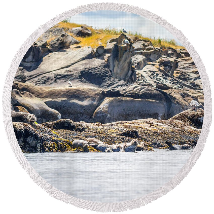 Harbour Seals Round Beach Towel featuring the photograph Seals And Rock Scupltures by Alanna DPhoto