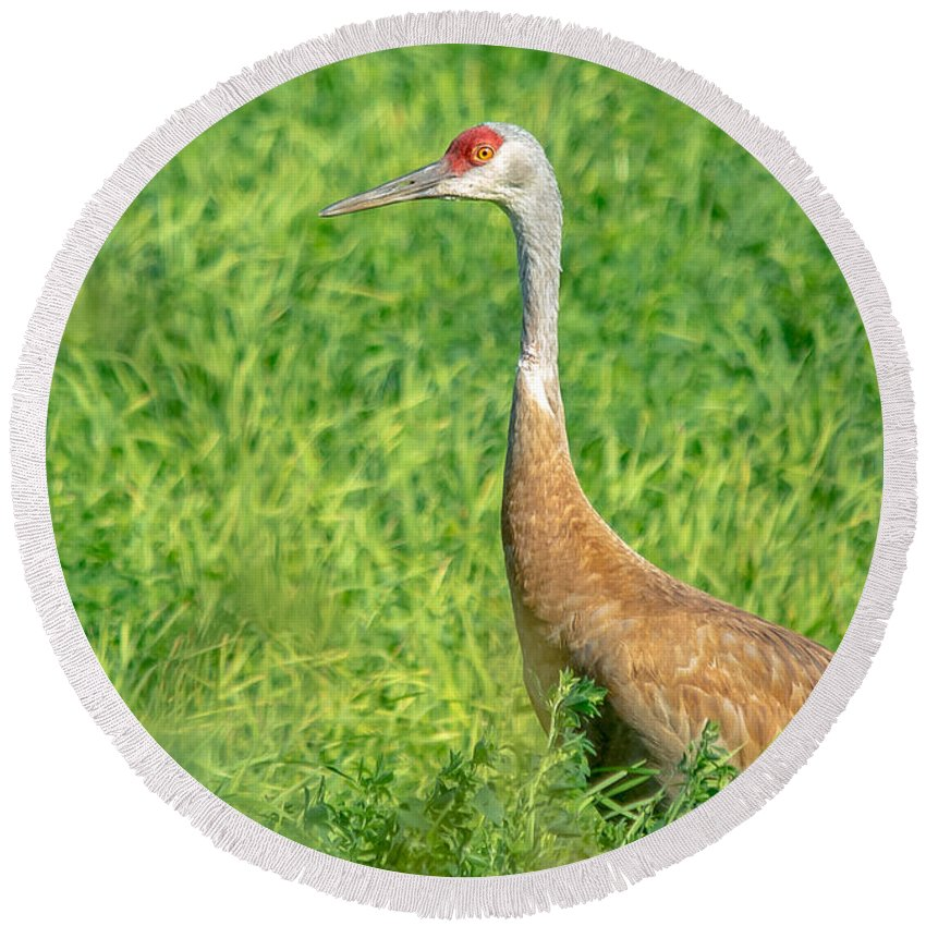 Field Round Beach Towel featuring the photograph Beautiful Crane by Cheryl Baxter