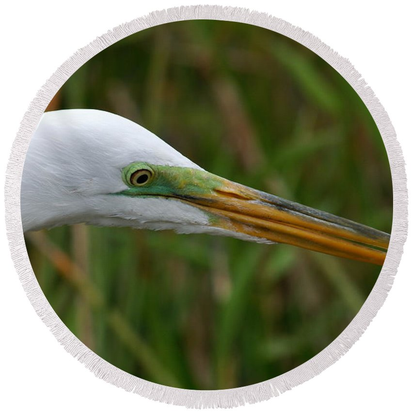 Egret Round Beach Towel featuring the photograph Beautiful Great Egret by Larry Allan