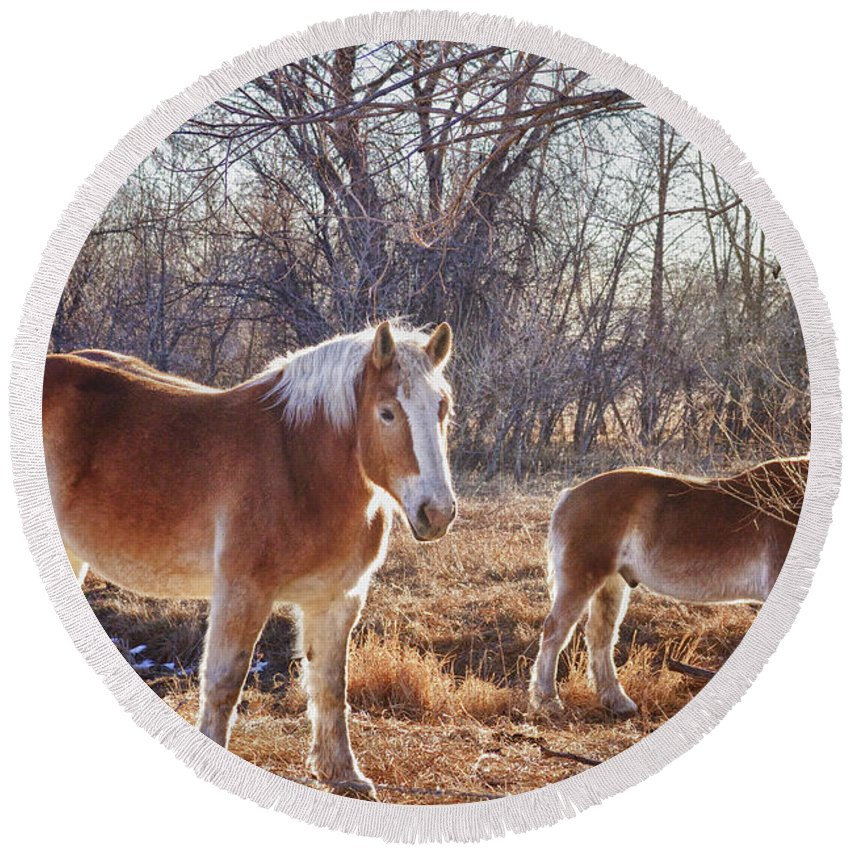 Horse Round Beach Towel featuring the photograph Beautiful Horses by James BO Insogna