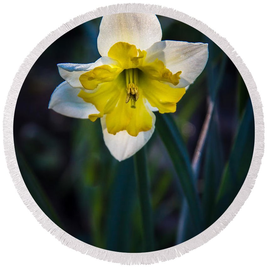 Amaryllis Family Round Beach Towel featuring the photograph Beautiful Narcissus by Robert Bales