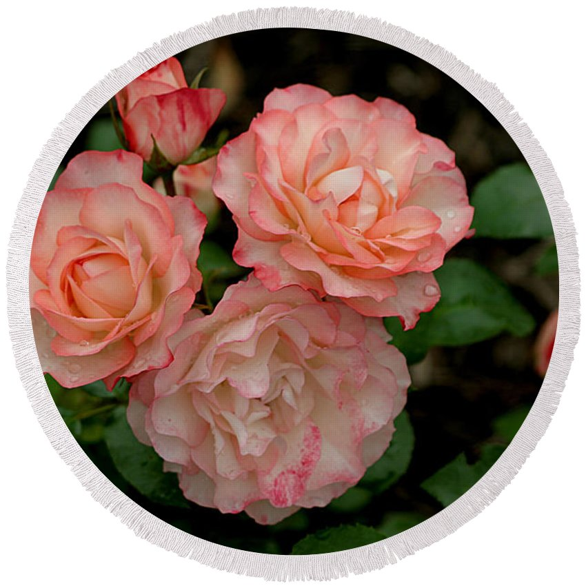 Roses Round Beach Towel featuring the photograph Beautiful Peach Roses by Living Color Photography Lorraine Lynch