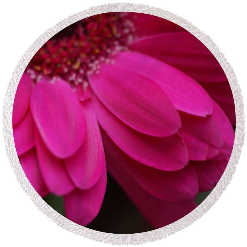 Pink Round Beach Towel featuring the photograph Beautiful Petals by Carol Lynch
