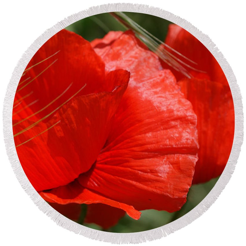 Poppies Round Beach Towel featuring the photograph Beautiful Poppies 10 by Carol Lynch