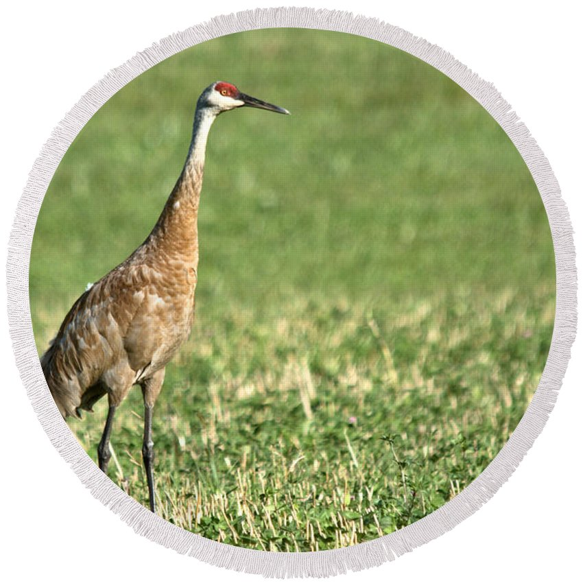 Sandhill Cranes Round Beach Towel featuring the photograph Beautiful Sandhill Crane by Cheryl Baxter