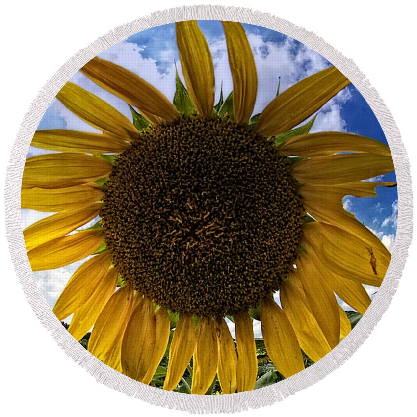 Sunflower Round Beach Towel featuring the photograph Beautiful Sunflower by Alice Gipson