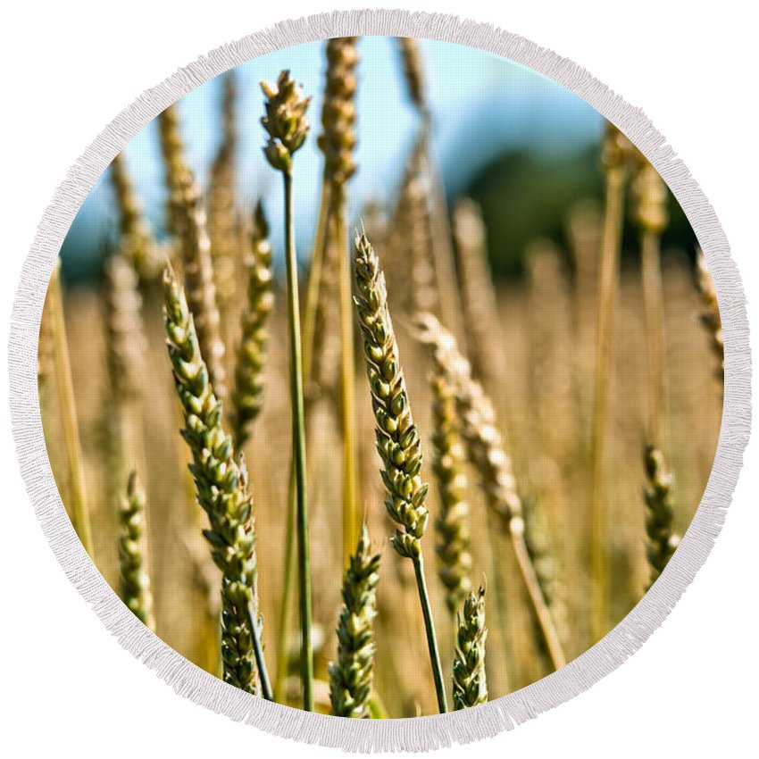 Wheat Round Beach Towel featuring the photograph Beautiful Wheat by Cheryl Baxter