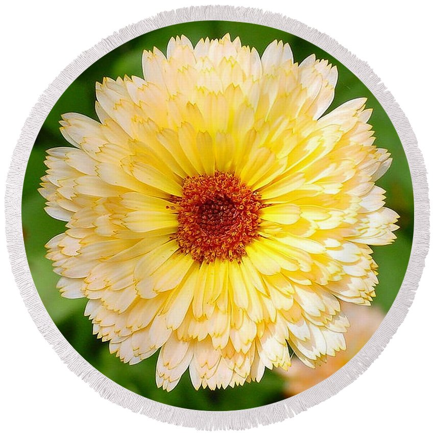 Flower Round Beach Towel featuring the photograph Beautiful Yellow Marigold Goldbloom Close Up by Taiche Acrylic Art