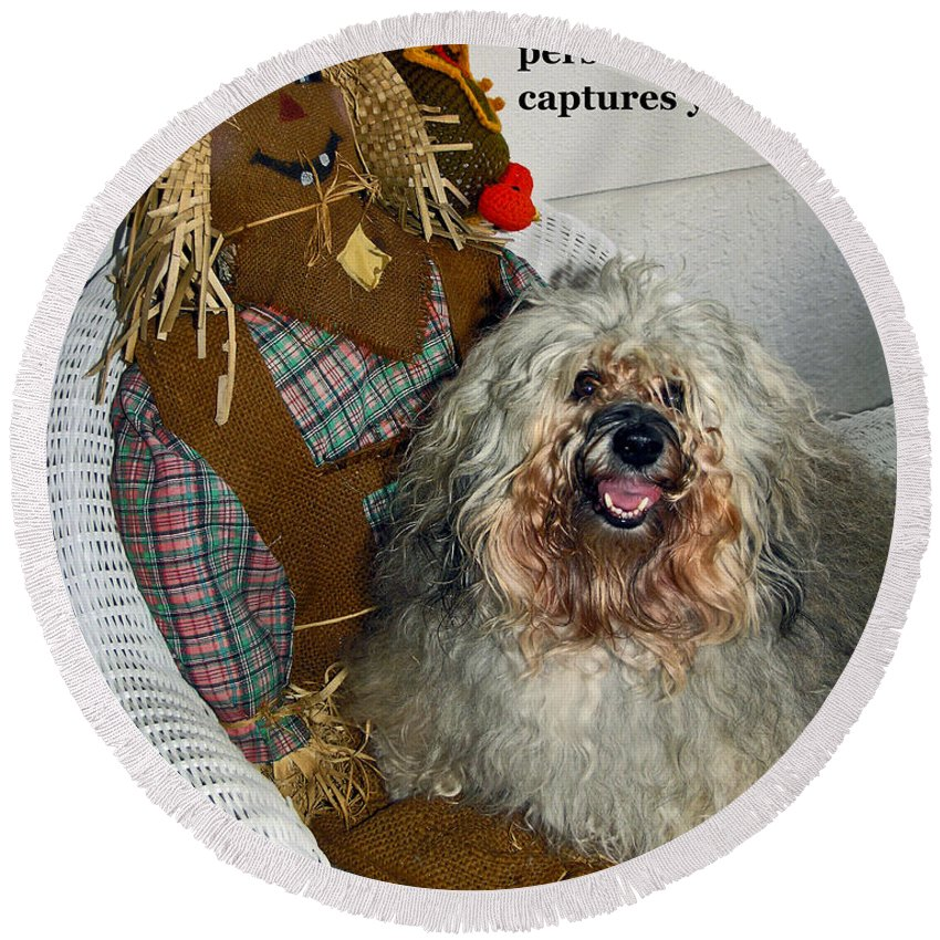 Havanese Dog Round Beach Towel featuring the photograph Beauty And Personality by Sally Weigand