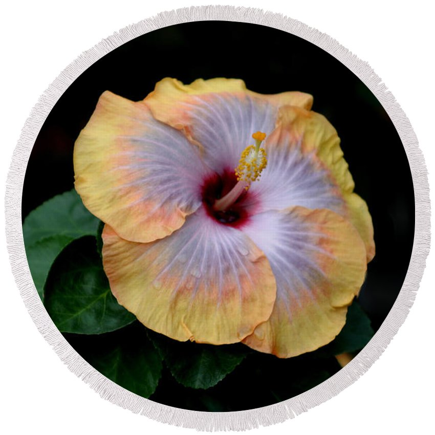 Hibiscus Round Beach Towel featuring the photograph Beauty Before Age by Living Color Photography Lorraine Lynch