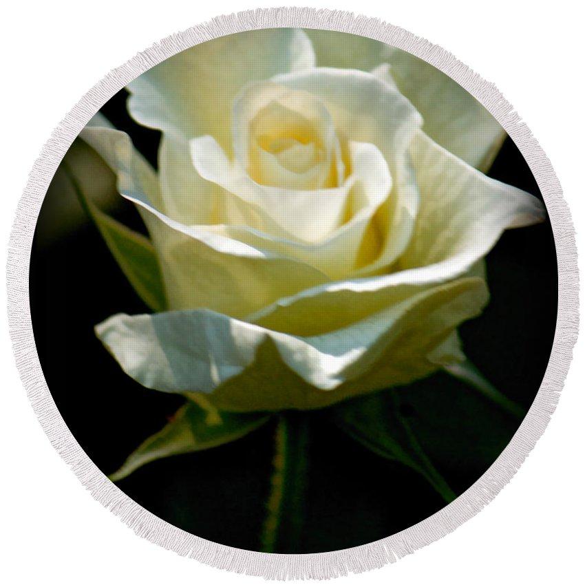 Sandra Clark Round Beach Towel featuring the photograph Beauty Of A Rose by Sandra Clark