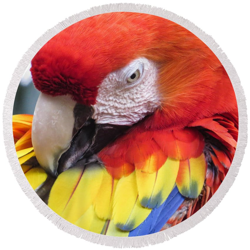 Parrot Round Beach Towel featuring the photograph Beauty Scarlet by Zina Stromberg