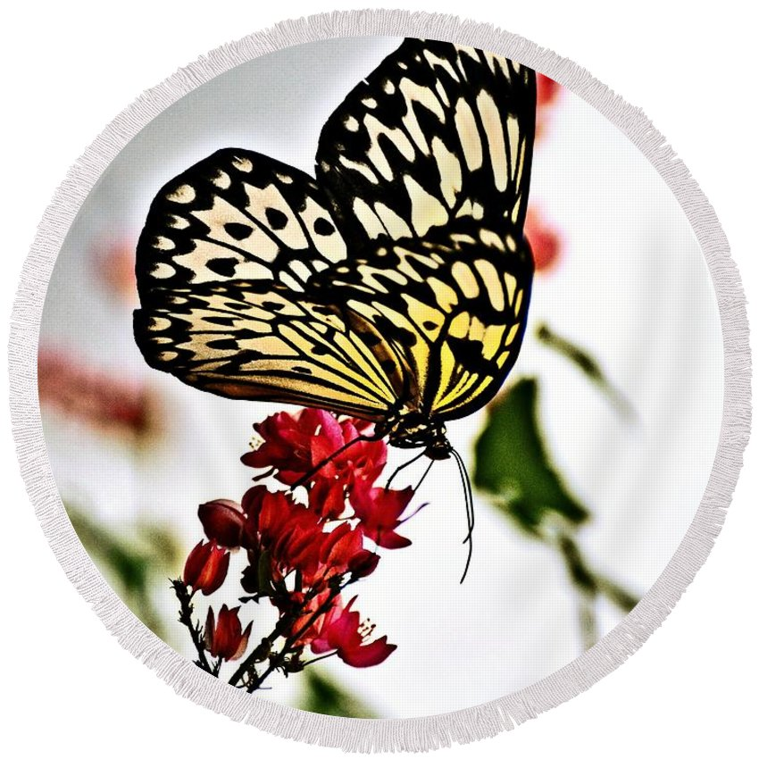 Butterfly Round Beach Towel featuring the photograph Beauty Wing by Marty Koch