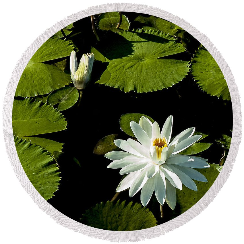 Water Lily Round Beach Towel featuring the photograph Becoming by Norman Johnson
