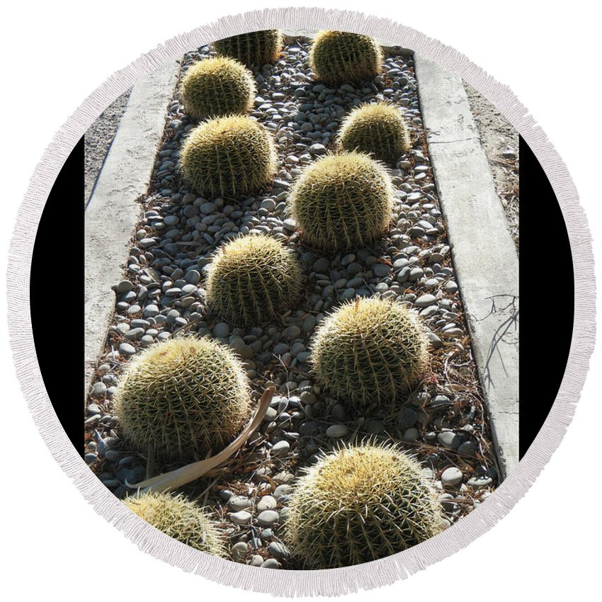 Arizona Round Beach Towel featuring the photograph Bed Of Barrel Cacti by Tamara Kulish