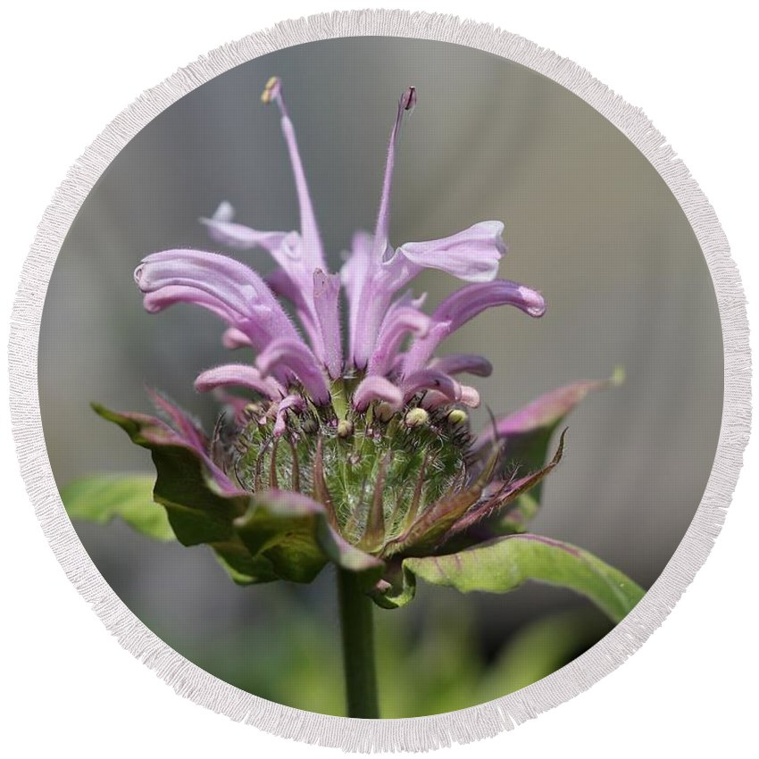 Bee Balm Round Beach Towel featuring the photograph Bee Balm From The Panorama Mix by J McCombie