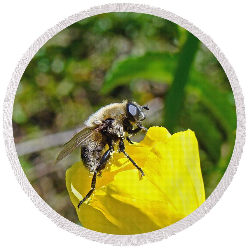 Fly Round Beach Towel featuring the photograph Bee Mimic On Primrose by Mother Nature