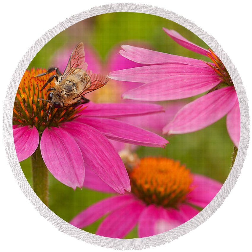 Coneflowers Round Beach Towel featuring the photograph Bee On Coneflower by Lindley Johnson