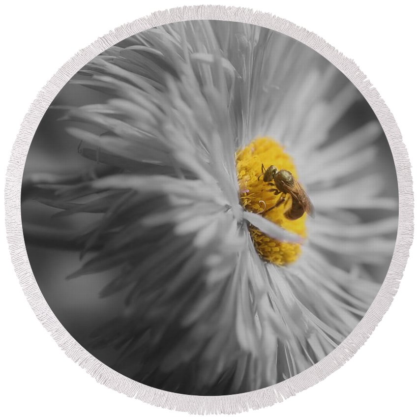 Bee Round Beach Towel featuring the photograph Bee On Daisy Flower by Smilin Eyes Treasures