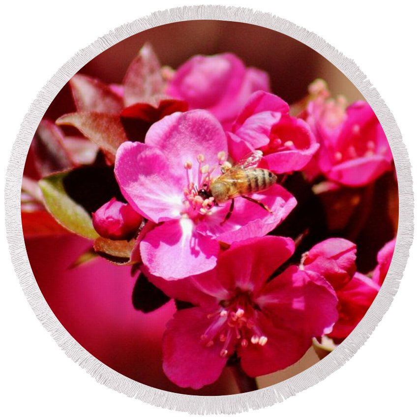 Bee Round Beach Towel featuring the photograph Bee On Pink Blossoms 031015ab by Edward Dobosh