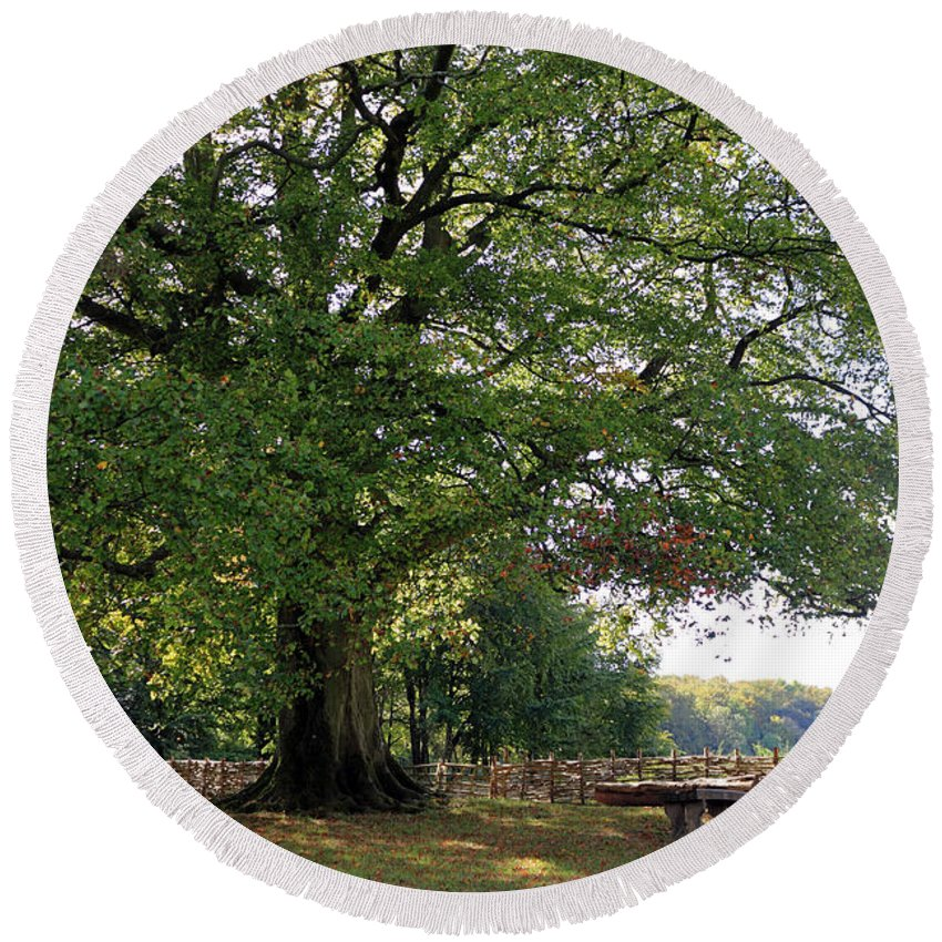 Beech Tree Britain Round Beach Towel featuring the photograph Beech Tree Britain by Julia Gavin