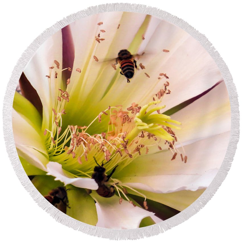 Cactus Round Beach Towel featuring the photograph Bees In Blossom by Zina Stromberg