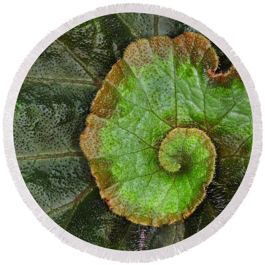Begonia Round Beach Towel featuring the photograph Begonia Leaf by Dave Mills