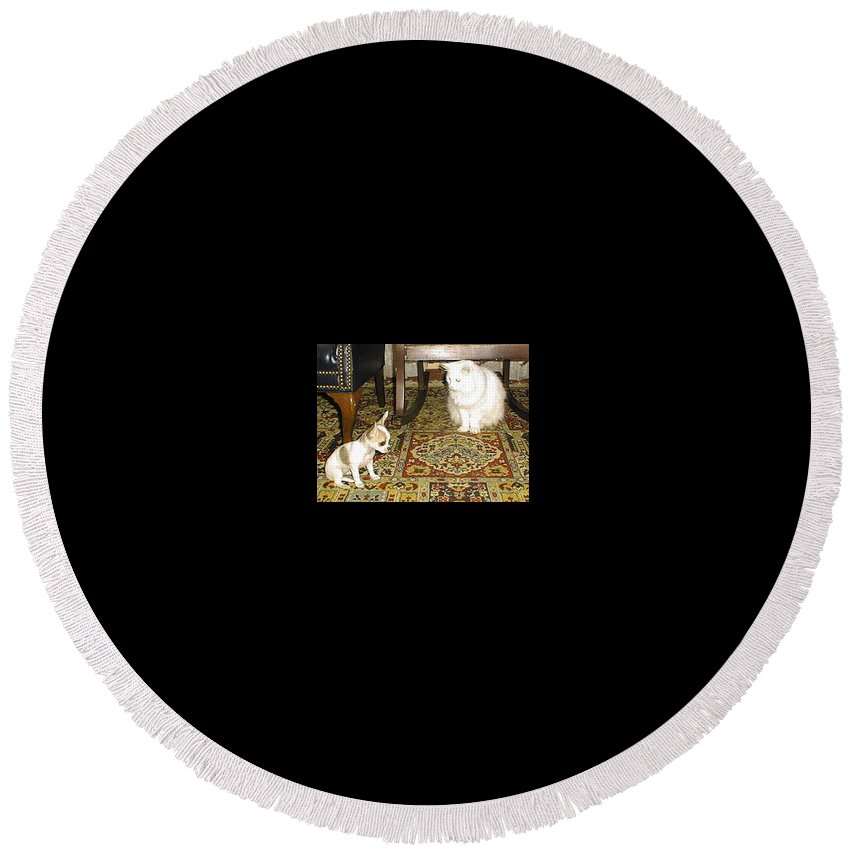 Chihuahua Round Beach Towel featuring the photograph Being Humble by Leah Delano