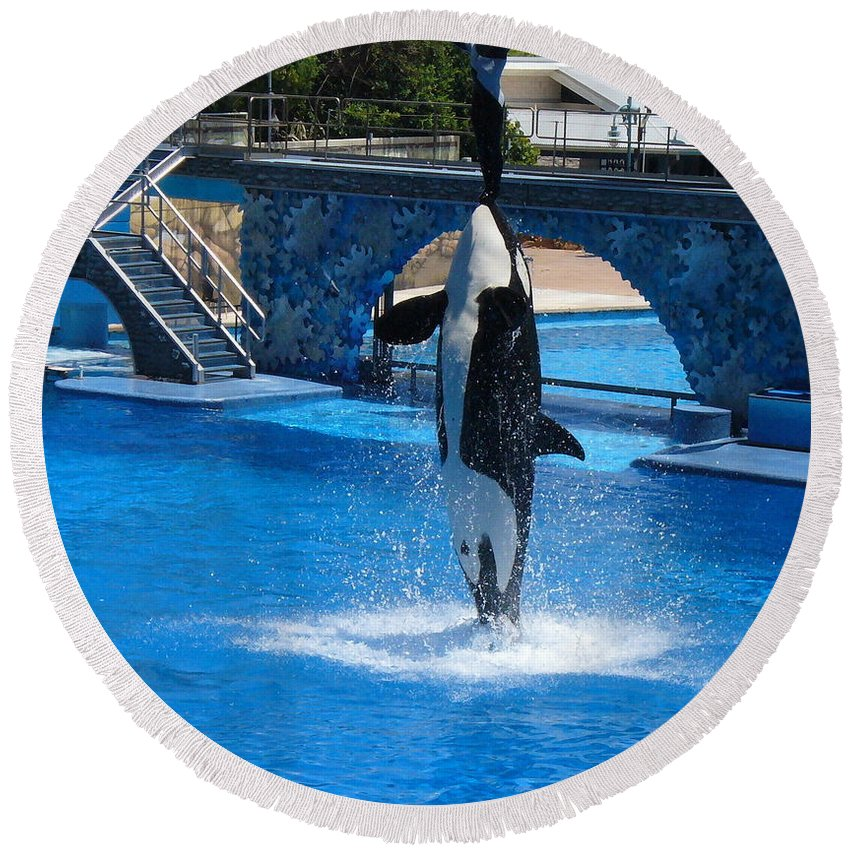 Orca Whale Photography Round Beach Towel featuring the photograph Believe by Lingfai Leung