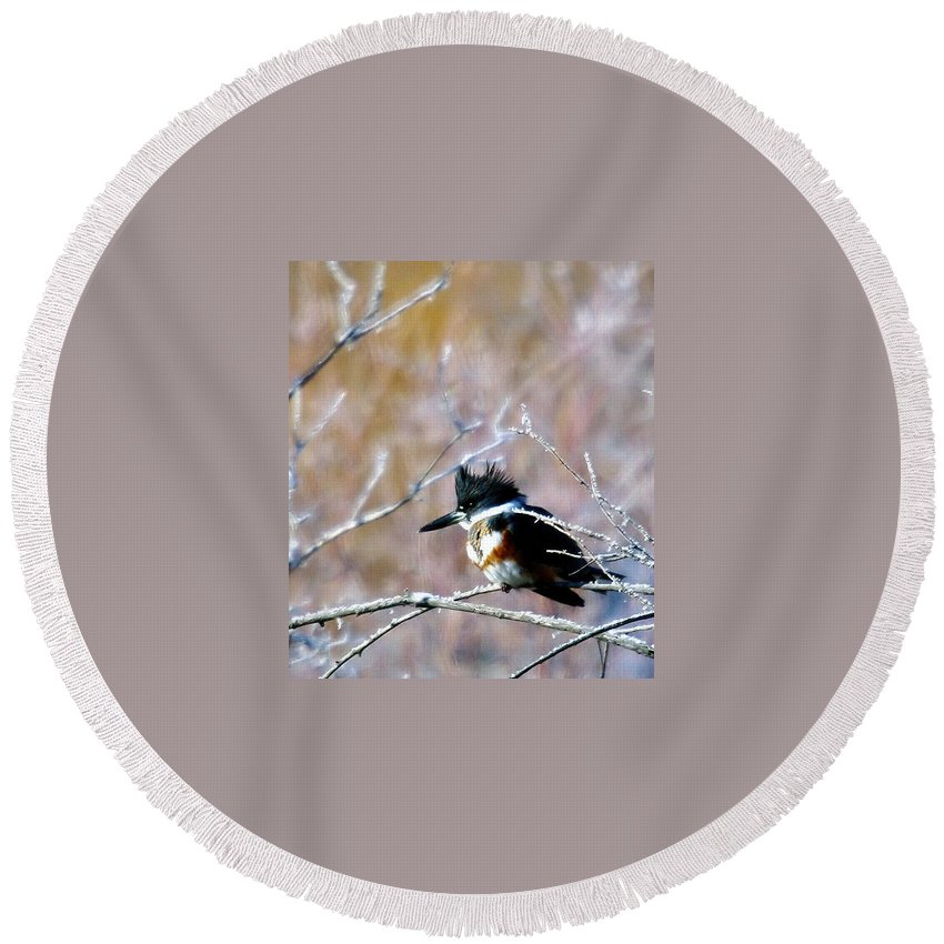 Birds Round Beach Towel featuring the photograph Belted Kingfisher by Jeff Swan