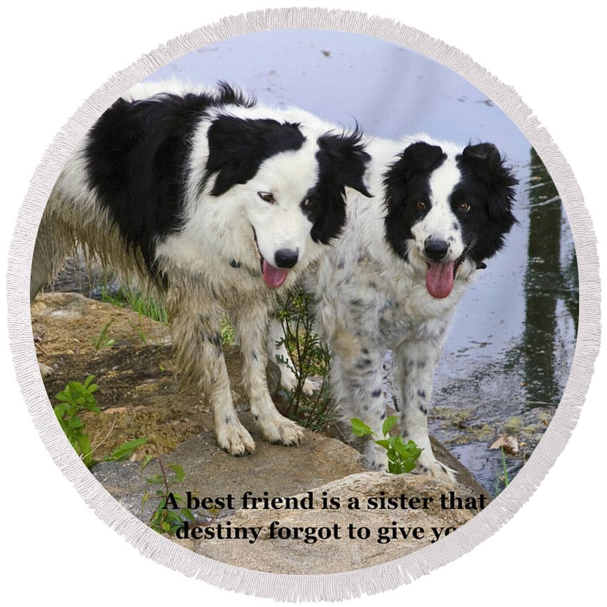 2 Border Collie Dogs Standing Round Beach Towel featuring the photograph Best Friends by Sally Weigand