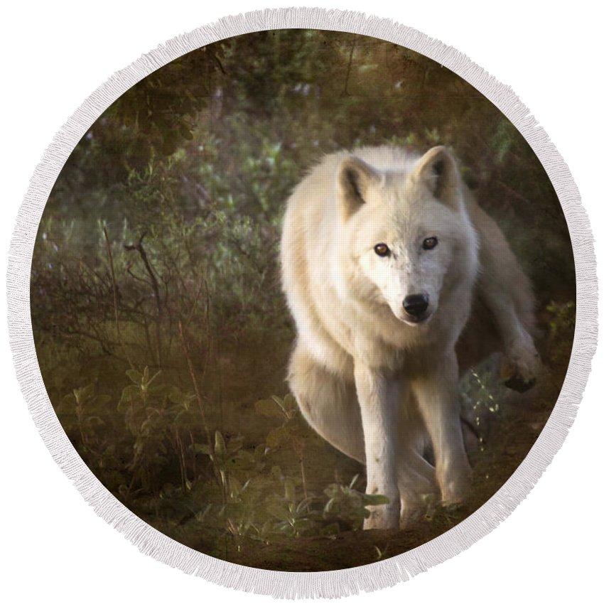 Wolf Round Beach Towel featuring the photograph Big Bad Wolf Sprinkling The Grass by Angel Ciesniarska