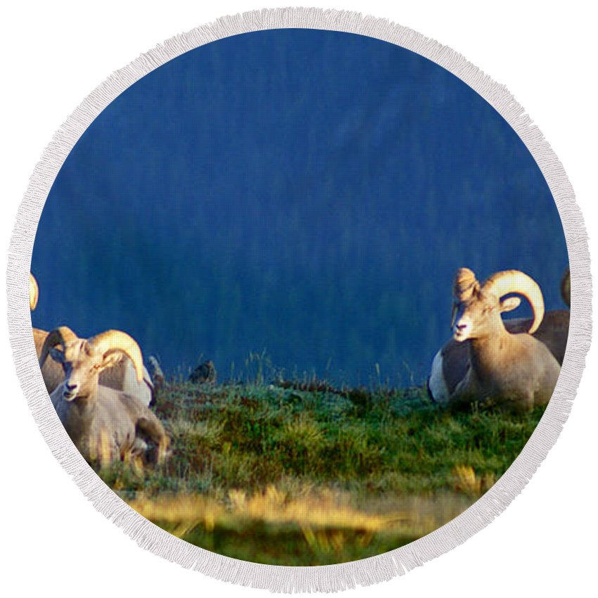 Bighorn Sheep Round Beach Towel featuring the photograph Big Horns by Heather Coen