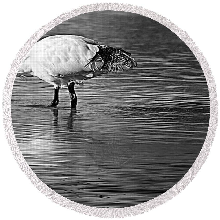 Bird Round Beach Towel featuring the photograph Bird Drinking by Ben Yassa